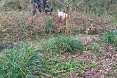 Willow-planting-SSCG-Feb-2020-01
