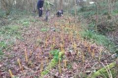 Willow-planting-SSCG-Feb-2020-2