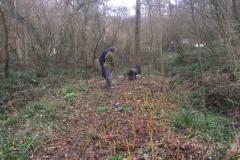 Willow-planting-SSCG-Feb-2020-3