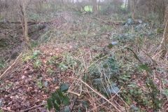 Willow-planting-SSCG-Feb-2020-4