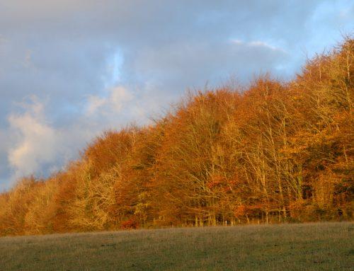 News: Observatree Autumn Round Up