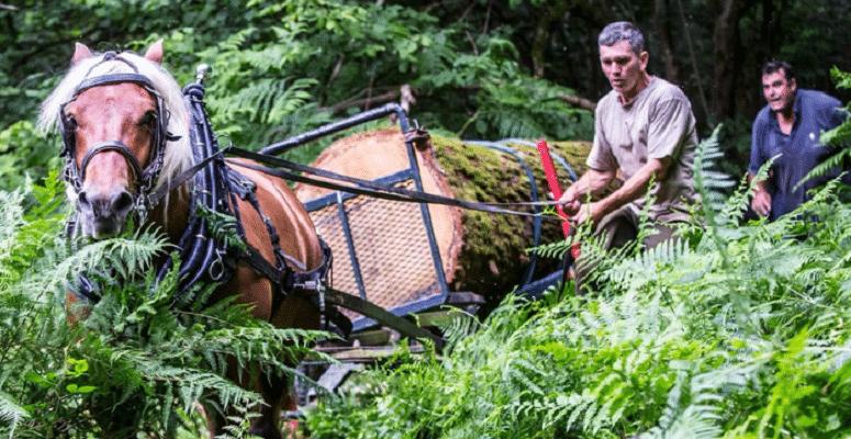 stanmer-horse-crop