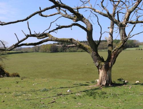 European Mountain Ash Associated Ringspot Virus