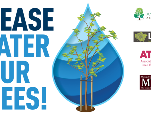 News: Tree watering campaign