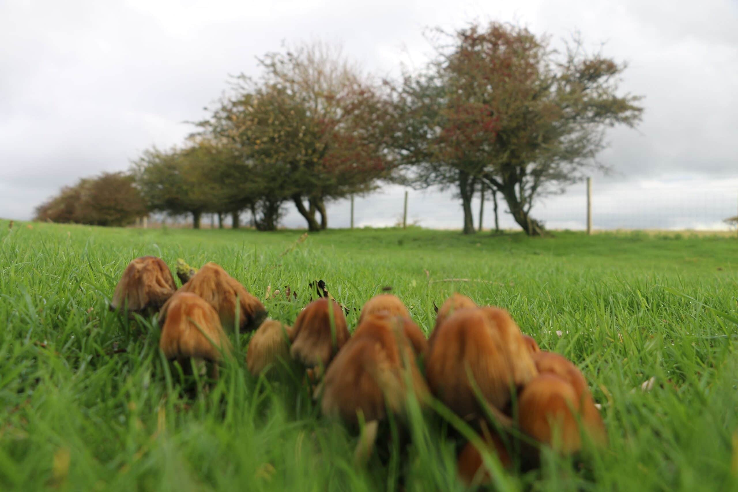 Mushrooms 3 SSCG Bob Iles 2020