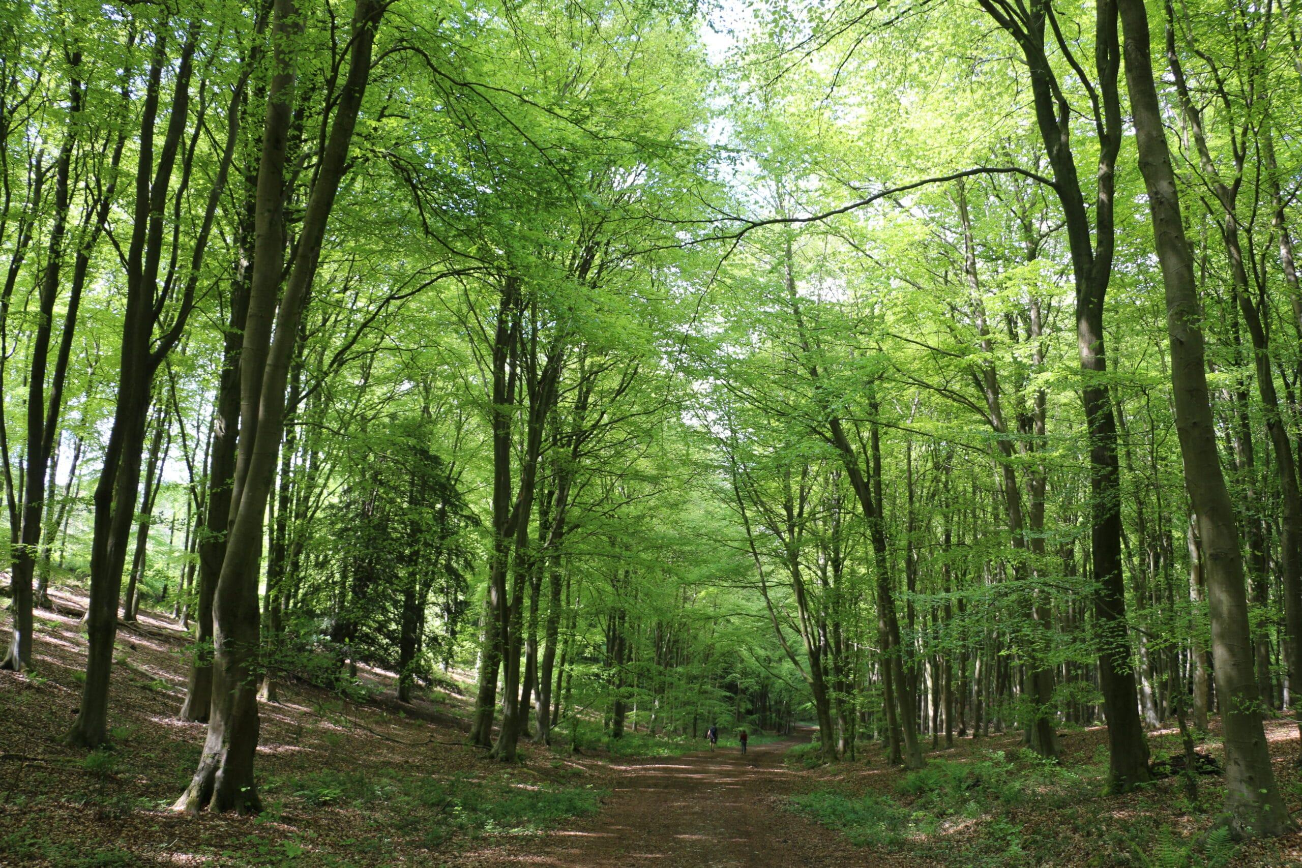 SSCG Woodland walk