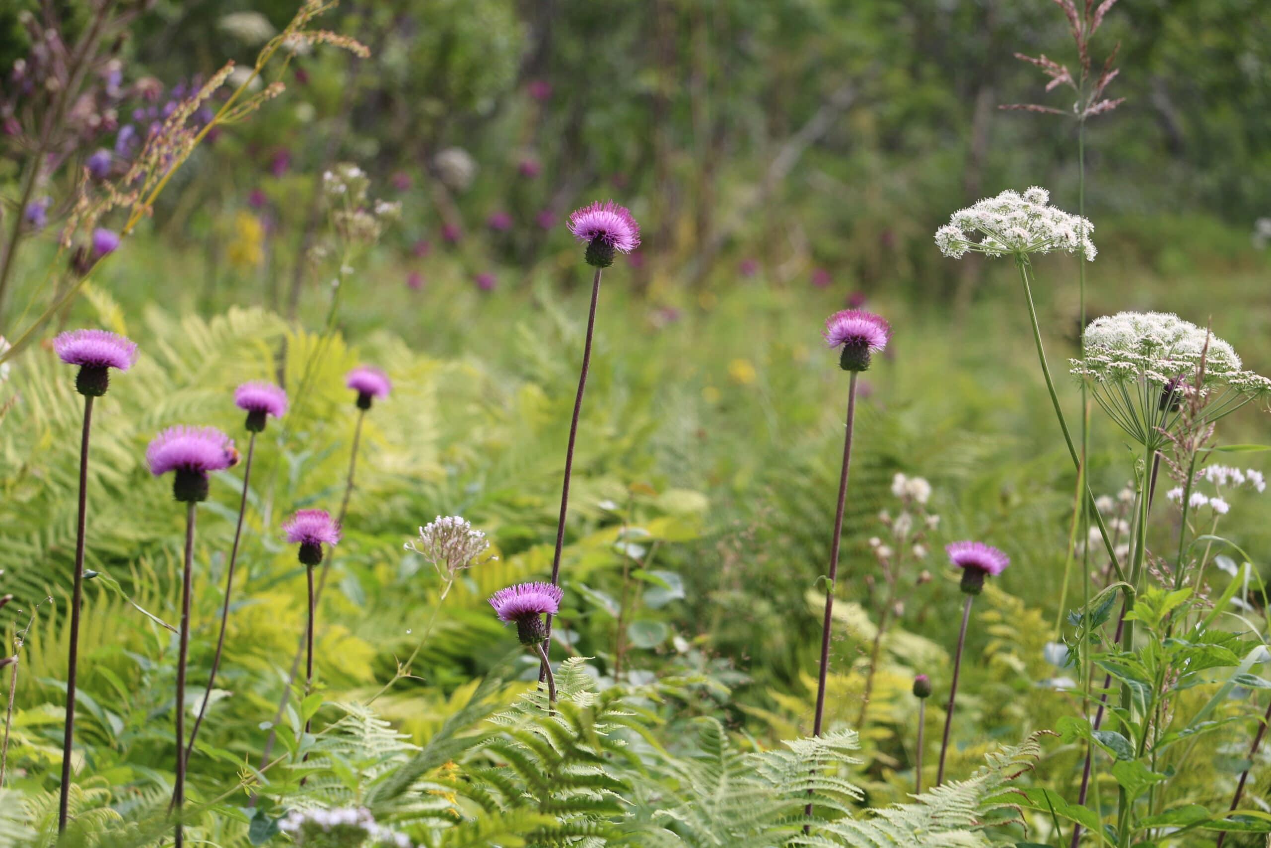 Wildflower by Bob Iles SSCG
