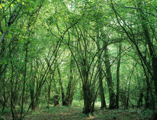 A GUIDE TO HAZEL COPPICE ASSESSMENT